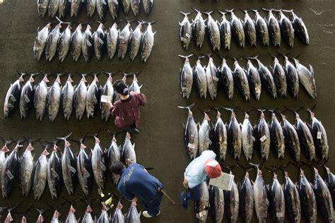 第一頁 上一頁 1 2 3 血汗生魚片 多種海洋生物瀕危 台灣醒報 awakening news networks