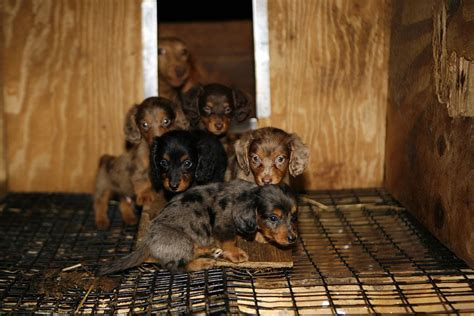 puppy mill puppies end of the line for backwoods puppy mill in west virginia best friends helps
