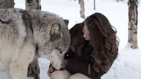 loyal wolf can't stop kissing his favorite person