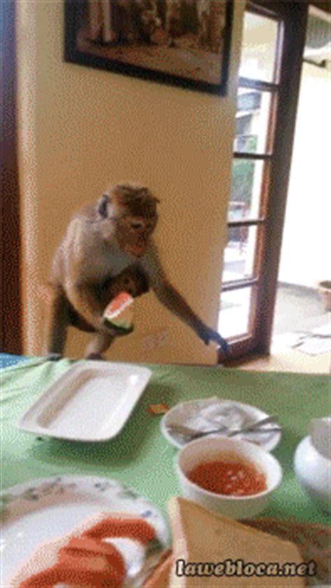 cutest funniest animal gifs