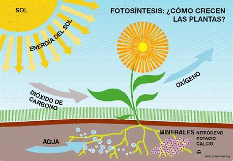 fotosintesis de las plantas la fotos 237 ntesis del griego antiguo φῶς φωτός fos fot 243 s