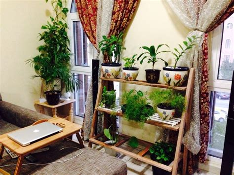 how to arrange indoor plants quick and easy way to organize indoor plants this is