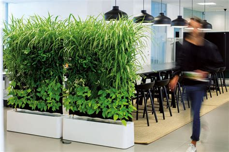 plant partition 15 natural plant wall ideas for room dividers house
