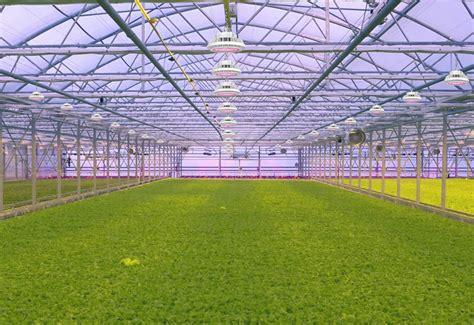 grow light options  cea controlled environment