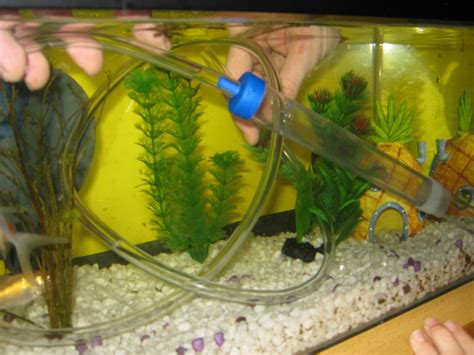 how to clean a fish tank hirerush blog