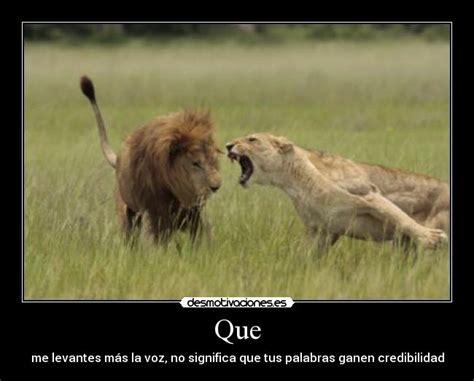 imagenes de leones haciendo el amor im 225 genes y carteles de animal desmotivaciones