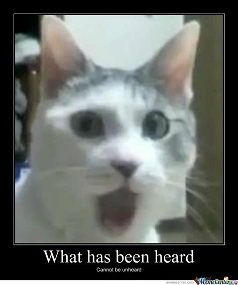 Shocked Cat Meme - shocked cat memes image memes at relatably com