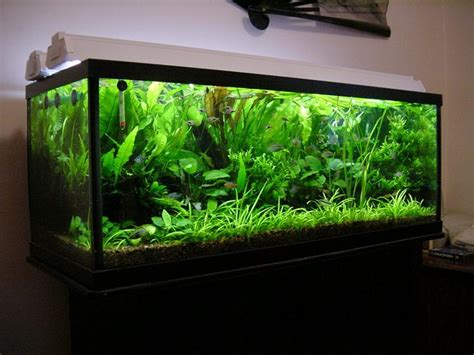 lighting for 55 gallon planted tank aquascaper s planted tanks photo id 121 version
