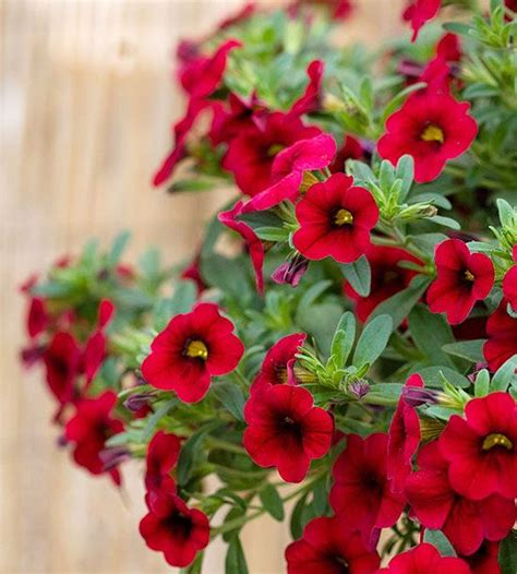 It S Fun And Challenging To Grow New Or Exotic Plants But Container Flower Garden