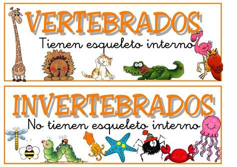 imagenes de animales vertebrados e invertebrados animales domesticos los animales vertebrados e invertebrados