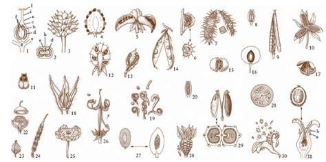 derivato di fiore frutto nell enciclopedia treccani