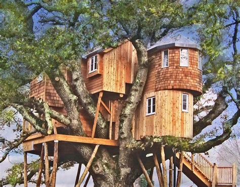 best treehouse 8 of the best treehouses galleries pics daily express