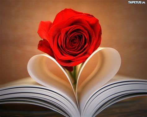 roses books kwiatek r 243 綣a czerwona zeszyt serce