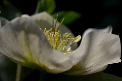 blumen pflanzen im garten pflanzen und blumen im garten