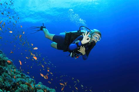 dive charter diving charter