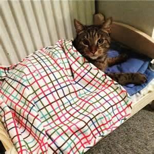 le saviez vous les chats s arrachent les lits de poup 233 es