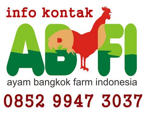 Mesin Penetas Telur Ayam Makassar ayam bangkok farm indonesia abfi ayam bangkok berkualitas