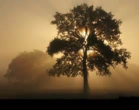 que repr 233 sente l arbre de theopedie