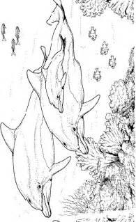 kleurplatenwereld nl gratis dieren dolfijnen