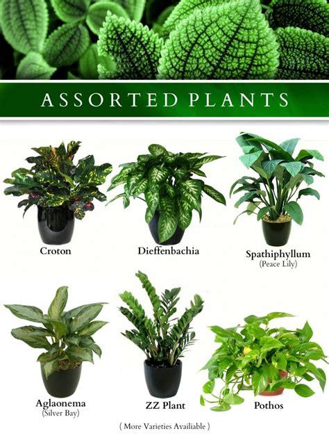plants exotic plants