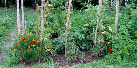 cornell cooperative extension food gardening