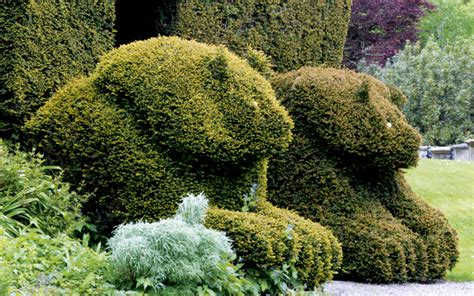 top tips  topiary country life