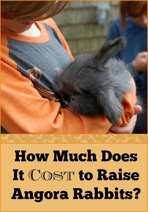 cost  raise angora rabbits