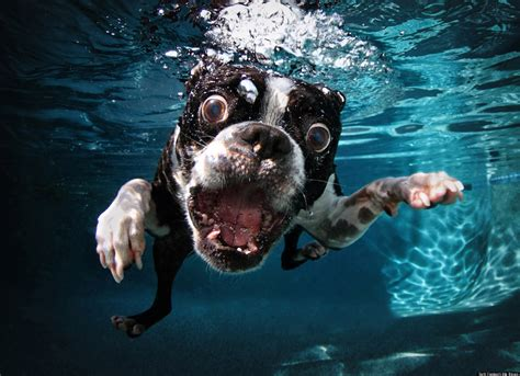 underwater dogs underwater dogs feature in new book of oh you photos