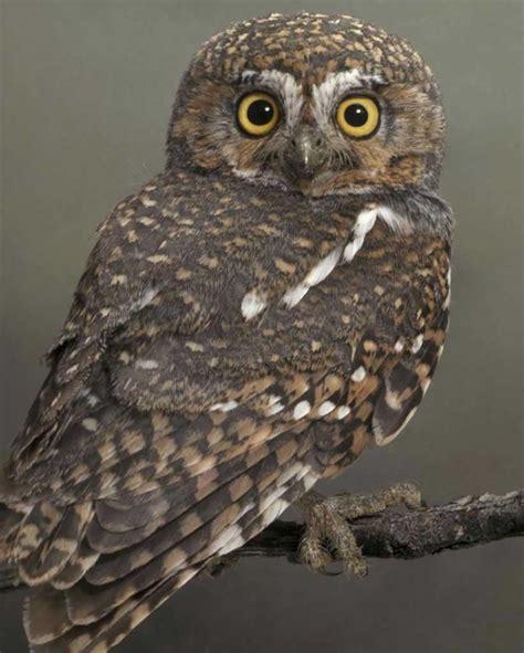 L Owl alek s stuff january 2013