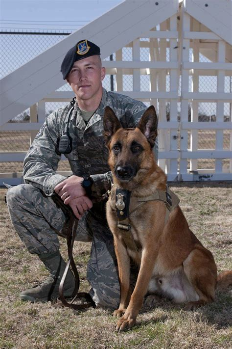 army dogs 130 best images about animals on