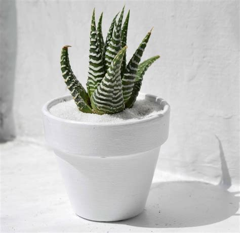 desk cactus 5 desk plants that are sure to survive your summer vacay