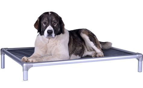 where to buy beds where to buy cedar chips for dog beds restateco dog beds