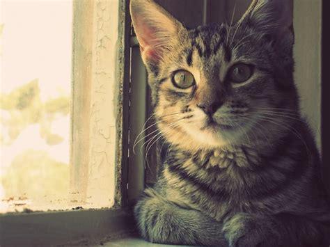 imagenes tumblr gatitos imagenes tumblr de gatos imagui