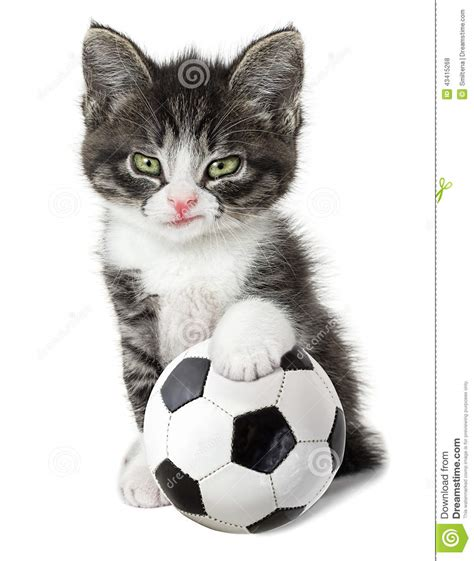 Kitten With A Soccer Ball Stock Photo   Image: 43415268