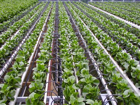 Garden Irrigation Increasing Crop Production By Using Drip Irrigation System