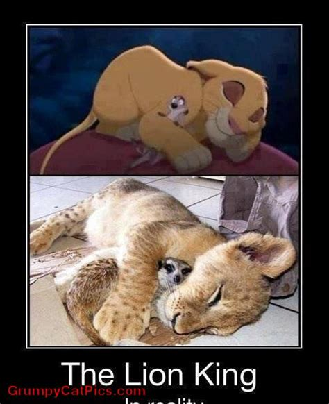 The Lion King Meme - lion king grumpy cat meme pictures to pin on pinterest