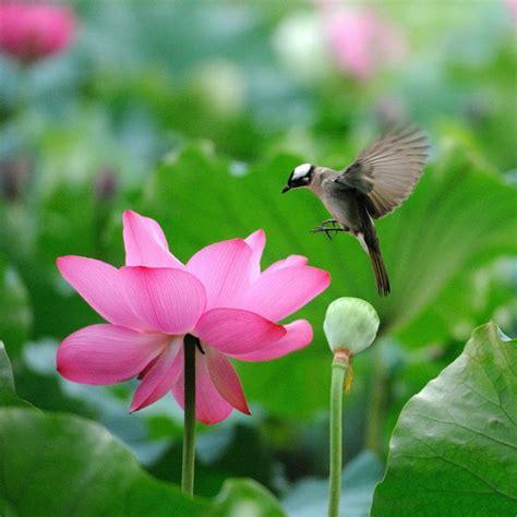beautiful lotus flower and cute birds flowers