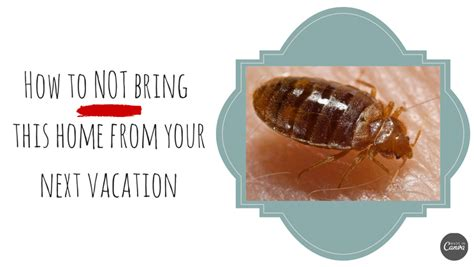 How To Check For Bed Bugs In A Hotel by How To Check For Bedbugs While Traveling Holy Kaw