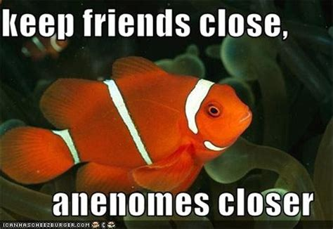 Funny Fish Memes - funny fish dump a day