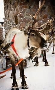 natural history santa magic reindeer canadian museum nature blog