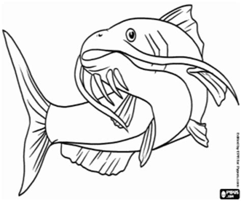 Coloring Page Flatfish Fishes Pages Printable Games