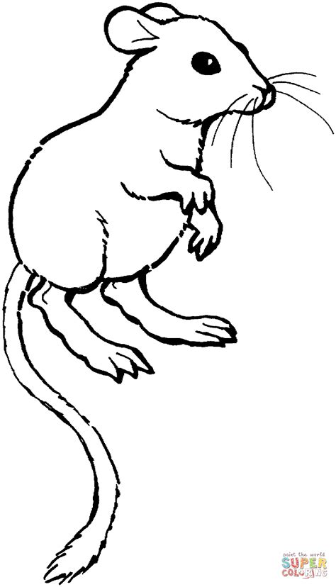 kangaroo rat coloring page free printable coloring pages