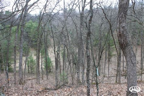 Wi Small Search Small Acreage Tract In A High Deer Density Area Of Central Wi Whitetail