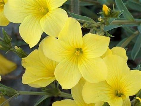 imagenes de flores naturales gratis image gallery imagenes de flores amarillas