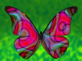 colorful butterfly beautiful colorful butterfly pictures 16 cool wallpaper