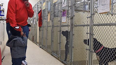 barcs dogs barcs resumes adoptions after weeks quarantine lifted chicago tribune