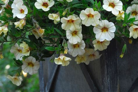 best plants 7 best plants for fall container gardens