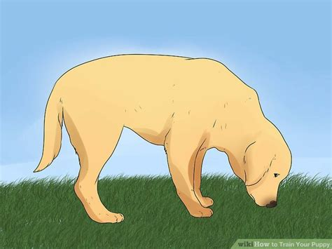 can i take my puppy outside before vaccinations how to your puppy with pictures wikihow