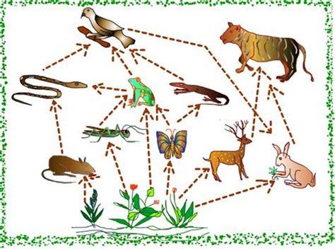 pengertian rantai makanan lengkap kumpulan artikel biologi