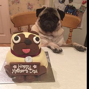 pugs r us 17 best images about pug things on artwork a pug and frozen treats